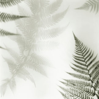 B1421D - Blaustein, Alan - Ferns No. 2