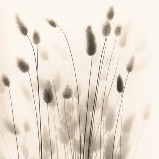 B1424D - Blaustein, Alan - Italian Tall Grass No. 1