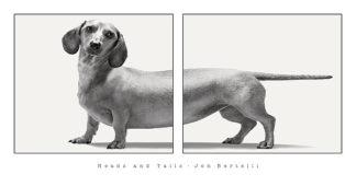 B3171 - Bertelli, Jon - Heads and Tails