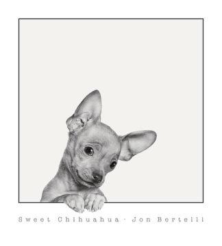 B3201 - Bertelli, Jon - Sweet Chihuahua