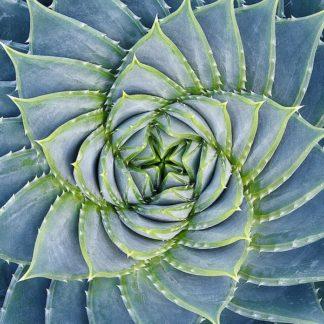 B3278D - Bell, Jan - Spiral Succulent