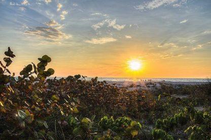 B3336D - Burdick, Chuck - Sea Grapes at Sunset