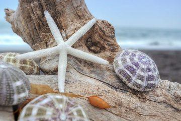 B3369D - Blaustein, Alan - Crescent Beach Shells 7