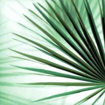 B3395D - Blaustein, Alan - Palm Leaf #1