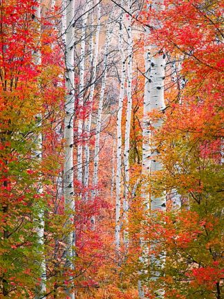 C1039D - Carmel, Elizabeth - Autumn Passage