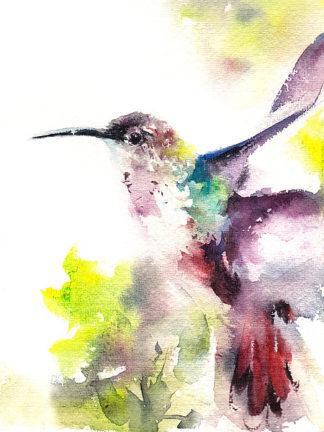 C1088D - CanotStop - Hummingbird