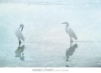 C1140 - Cmarits, Hannes - White Cranes