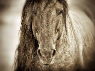 D1025D - Dearing, Lisa - Mustang Sally
