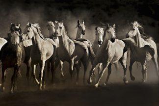 D913D - Dearing, Lisa - Dream Horses