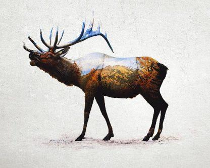 D940D - Davies Babies - Rocky Mountain Elk