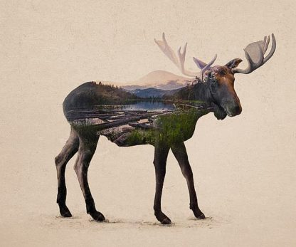 D999D - Davies Babies - The Alaskan Bull Moose