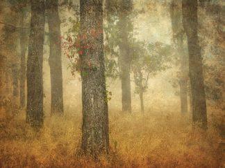 G729D - Guion, William - Oak Grove in Fog