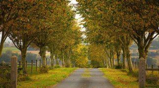 G770D - Gonçalves, Adelino - Colors of Autumn