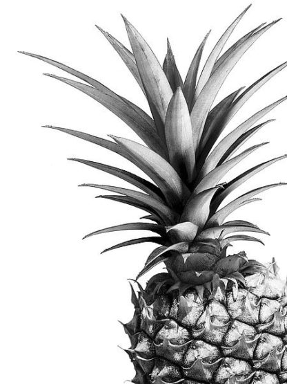 G835D - Greer, Lexie - Pineapple (BW)