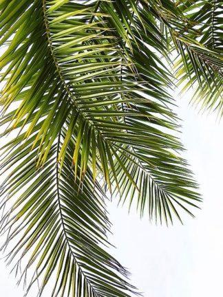 G841D - Greer, Lexie - Palm Leaves