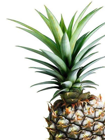 G842D - Greer, Lexie - Pineapple (color)