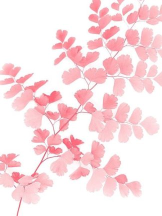 G843D - Greer, Lexie - Pink Maidenhair