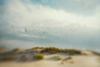 H1059D - Hanna, Dawn D. - Dunes 1