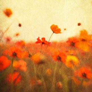 H1123D - Hanna, Dawn D. - Orange Happiness