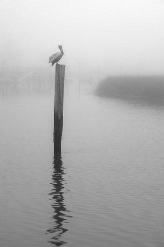 H1124D - Hiers, Winthrope - On Pelican Marsh