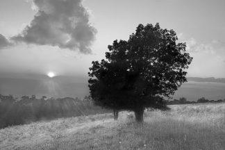 H1219D - Hiers, Winthrope - Spitler Knoll Overlook