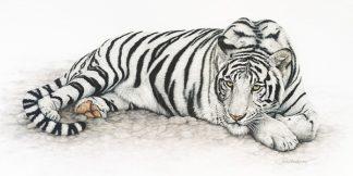 H500D - Henderson, Jan - Siberian Tiger