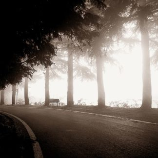 IN30817 - PhotoINC Studio - Roadside Bench