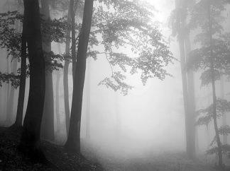 IN31582 - PhotoINC Studio - Woods