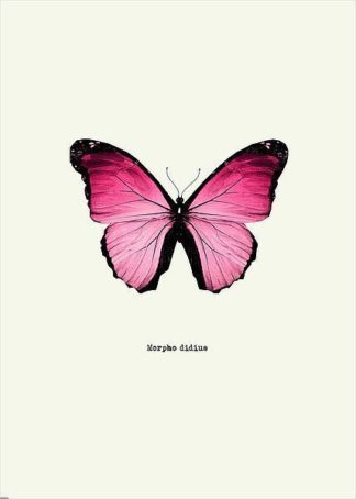 IN31888-4 - GraphINC - Pink Butterfly