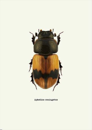 IN31889-1 - GraphINC - Beetle Orange