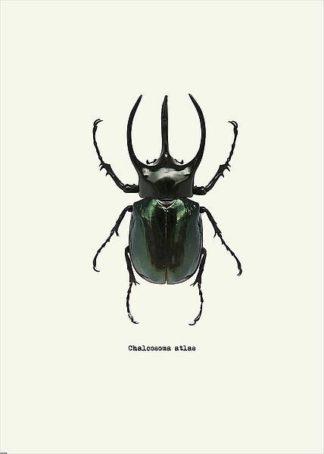 IN31889-2 - GraphINC - Beetle Black