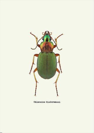 IN31889-3 - GraphINC - Beetle Green