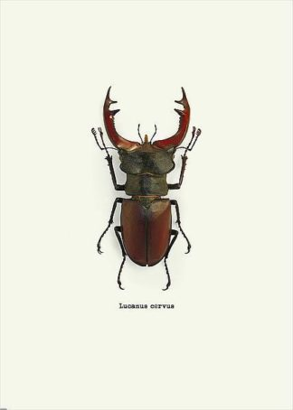 IN31889-4 - GraphINC - Beetle Red