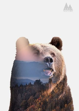 IN32110 - Clean Nature - Bear