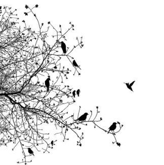 IN32114 - GraphINC - Bird I