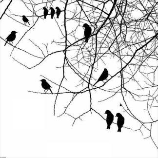 IN32115 - GraphINC - Bird II