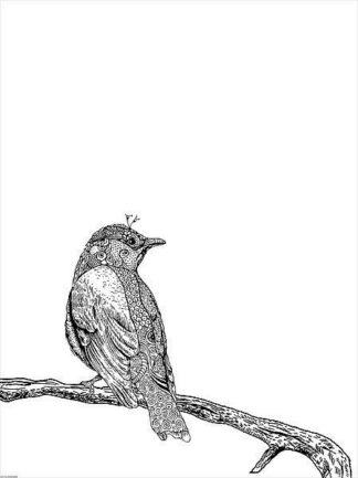 IN32116 - GraphINC - Bird III