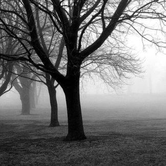 IN34008 - PhotoINC Studio - Trees