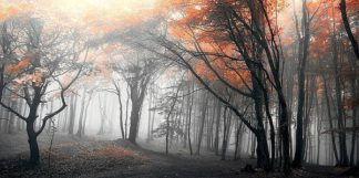 IN34046 - PhotoINC Studio - Autumn Woods