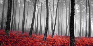 IN34047 - PhotoINC Studio - Autumn Woods