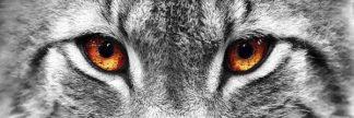 IN38005-4 - PhotoINC Studio - Lynx