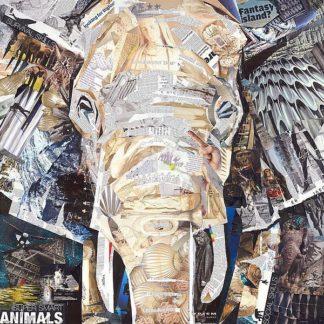 INJG118 - Grey, James - Elephants Gaze