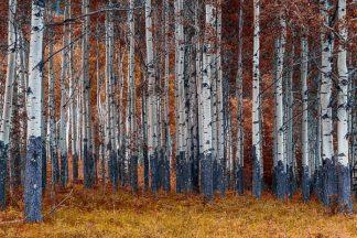 K2486D - Kostka, Vladimir - Autumn Forest