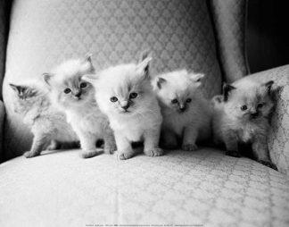 L703 - Levin, Kim - Five Kittens