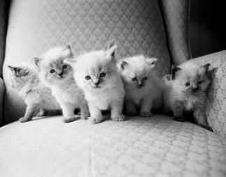 L703D - Levin, Kim - Five Kittens