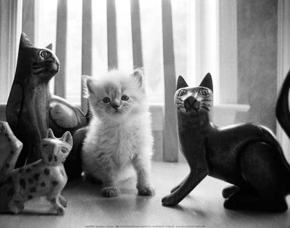L706 - Levin, Kim - Ragdoll Kitten