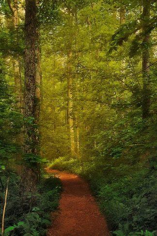 M1298D - Mikaels, Natalie - Fairytale Path