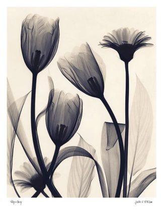 M872 - McMillan, Judith - Tulip and Daisy