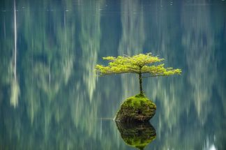 O220D - Oldford, Tim - Fairy Lake Bonsai