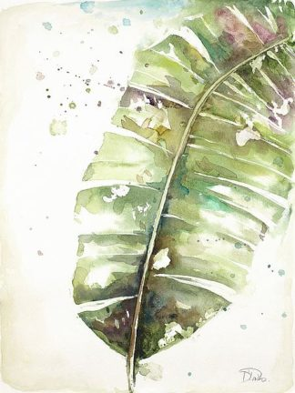 P1106 - Pinto, Patricia - Watercolor Plantain Leaves II